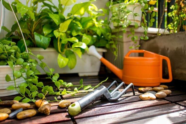 Harke und Gießkanne vor Pflanzen