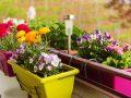 Balkongarten: Tipps für dein Balkonparadies