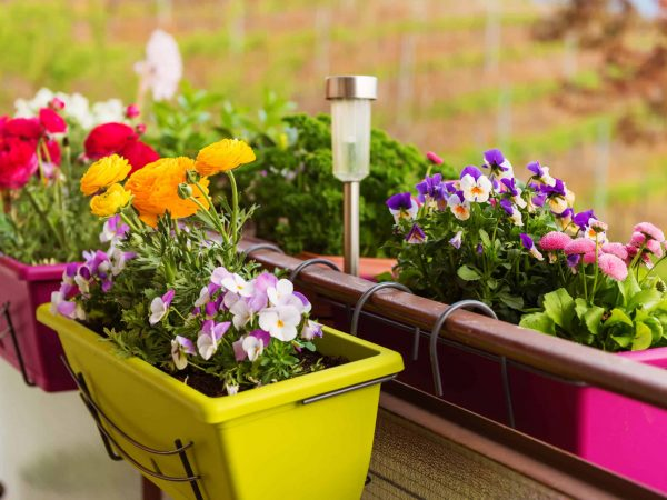 60420363 – colorful flowers in pots on the balcony