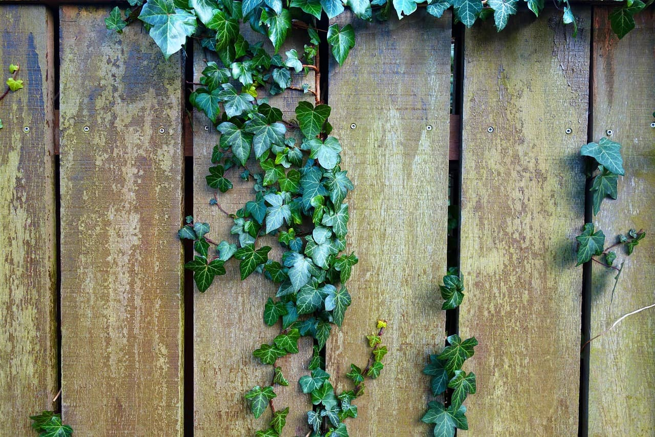 Sichtschutz Test Empfehlungen 06 20 Gartenbook